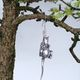 <b>Bedwyr Williams</b>, <i>Manawydan a`r Llygoden</i>, Silver Mouse earring, Larch bonsai tree, 2010. Courtesy the artist and Ceri Hand Gallery